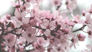 春ぽんちゼリー,セブン,口コミ