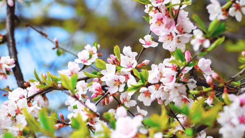 桜と宇治抹茶のパフェ,セブン,カロリー